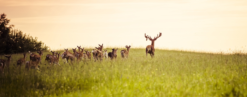 Partnering to protect Wyoming wildlife