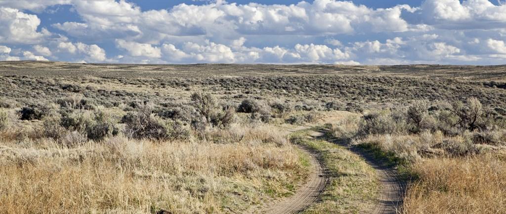 Boosting an ecosystem: desert sagebrush