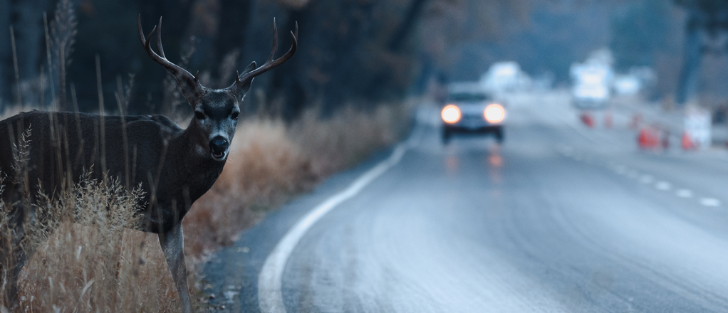 Saving wildlife while keeping drivers on the go