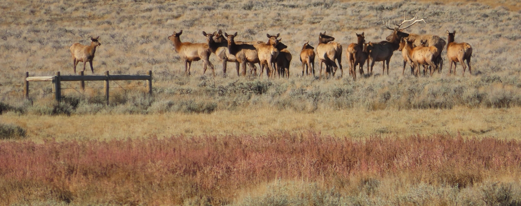 Williams Honored with Wyoming wildlife award